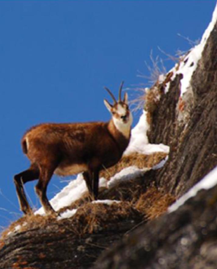 Mercredi Journée L'Écot, Parc national de la Vanoise